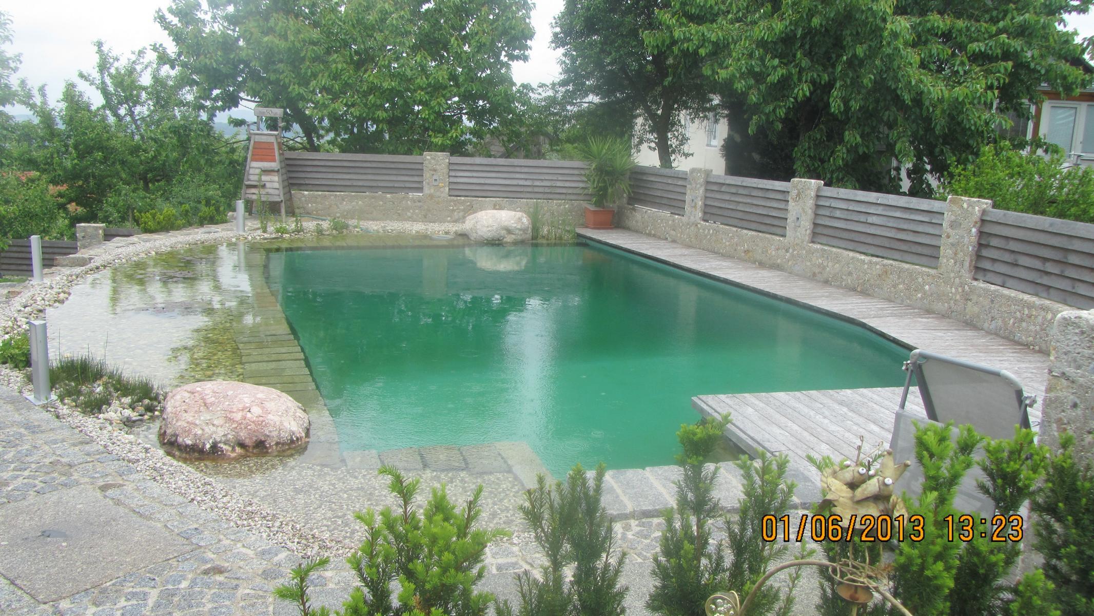 Der teichdoktor pflegepionier schwimmteichpflege for Naturteich zum schwimmen
